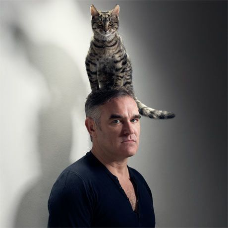 14 Arbres à chat humains