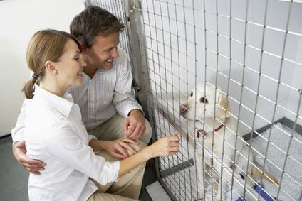 5 Conseils pour effectuer un test de tempérament de chien avant d`adopter de refuge
