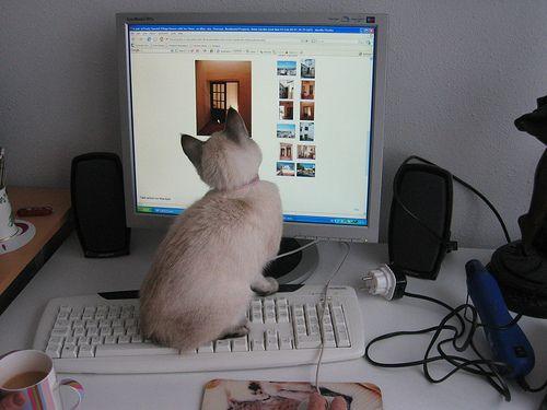 6 Étapes vers un espace de travail informatique sécurisé pour les chats