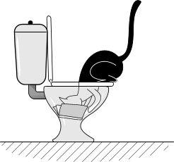 8 Choses que les chats font avec la tête dans les toilettes