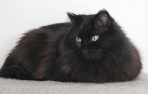 Chat sauvé après un bain d`hiver