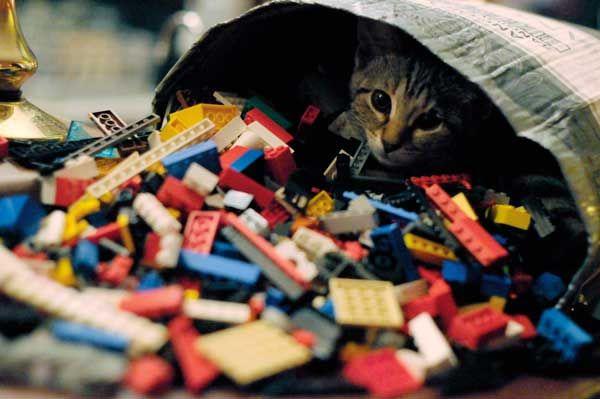 Cat tourisme: trouver des pintes et des chattes dans les pubs en angleterre