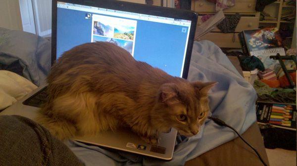 Les chats où ils n`appartiennent pas: maintenant nous ne ferons jamais rien!