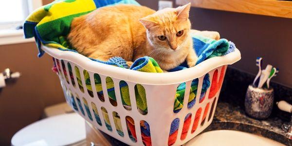4 Façons de vivre vert profite à mes chats et à moi-même