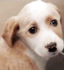 Freekibble.com donne 100% de croquettes aujourd`hui aux victimes d`animaux de joplin tornado