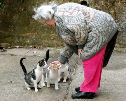 Aidez les chats sauvages frappés durement par l`ouragan Earl