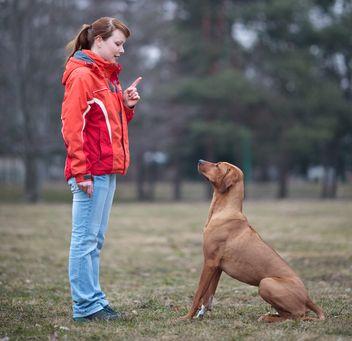 Éleveur travaillant avec son chien parent