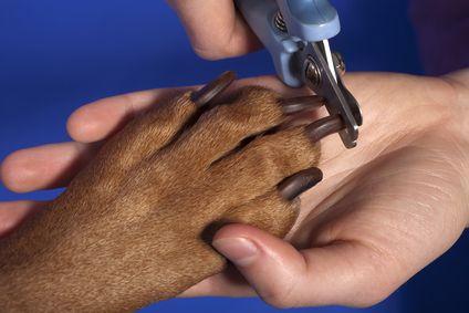 Coupe ongle de chien