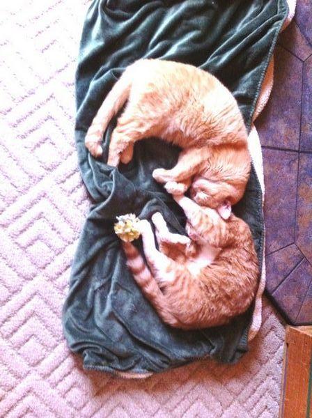 Comment transformer vos amis ambivalents en véritables amoureux des chats