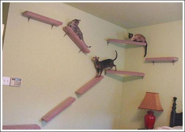 Kitty maison de rêve