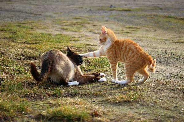 Mâle vs femelle chat - lequel vous convient le mieux?