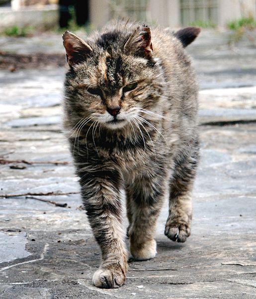 Journée nationale des chats sauvages: faites partie de la solution