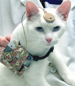 Nih ne permettra plus aux chercheurs d`acheter des chats de source aléatoire