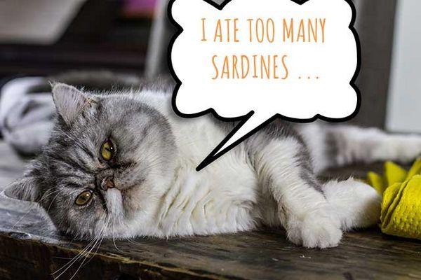 Chat avec une bulle de pensée qui dit que j`ai mangé trop de sardines