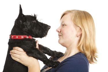 Tempérament écossais Terrier. Scotty et fille