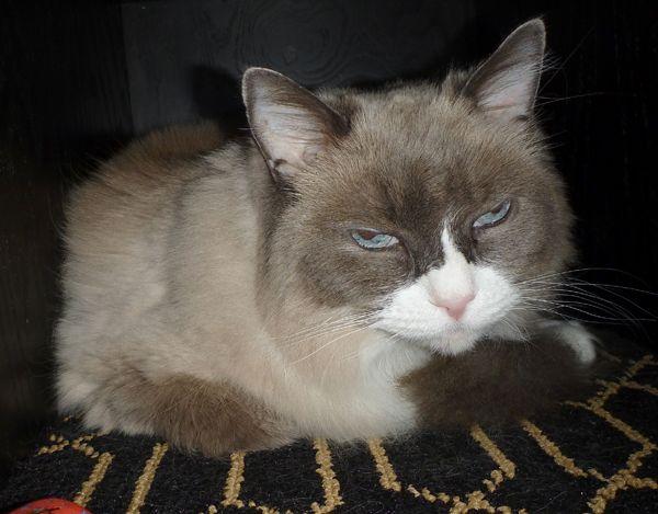 Les 10 meilleures choses de la fête annuelle de l`hôtel algonquin pour Matilda le chat résident