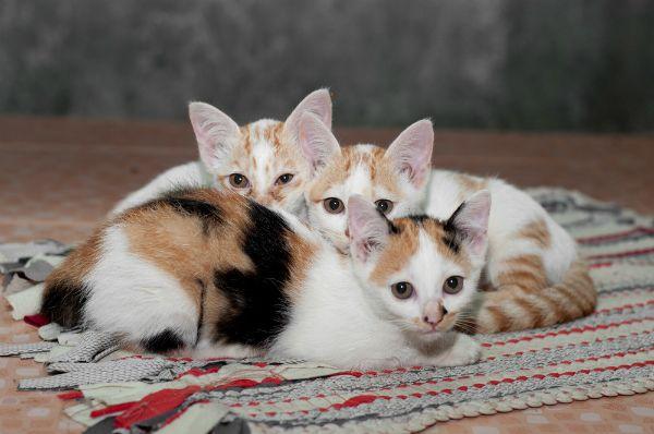 Les 10 noms de chats les plus branchés de 2012