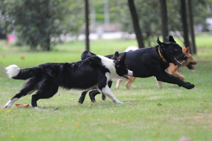 Les avantages de l`exercice pour les chiens ayant des problèmes de comportement
