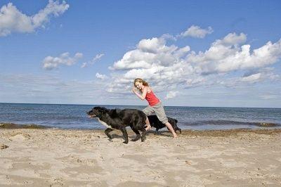 Top 10 des raisons d`exercer votre chien tous les jours