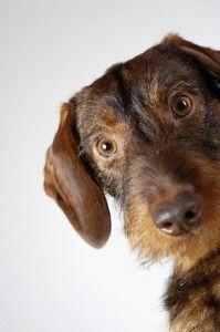 Top 10 des moyens de prévenir l`anxiété de séparation chez les chiens