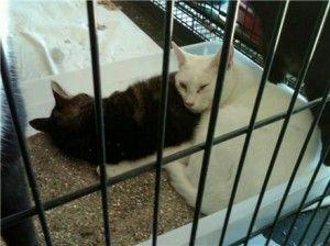 Mise à jour: les chats saisis du sauvetage en Caroline du Sud