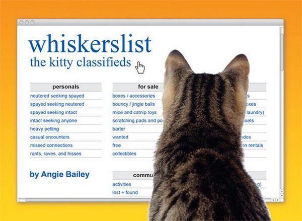 Nous parlons à catster écrivain angie bailey à propos de son livre d`humour de chat
