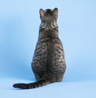 Ce que disent vos meubles de chat à votre sujet